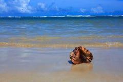 tropiskt strandhavsskal Arkivfoton