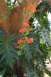 Tropiskt träd & blomma royaltyfri bild