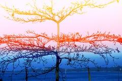 Tropiskt träd med abstrakt färgrikt Royaltyfria Bilder