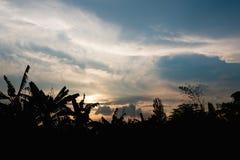 Tropiskt tr?d f?r kontur och guld- himmelskymning i afton p? skogen p? berget landskapsiktsbakgrund royaltyfri bild