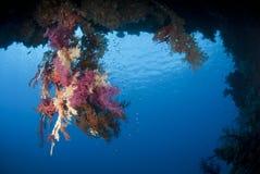tropiskt undervattens- för färgglad korallrevplats Royaltyfri Fotografi