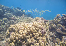 tropiskt undervattens- för korallrev Royaltyfri Fotografi