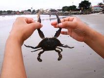 tropiskt undervattens- för krabbalivstidshav royaltyfri fotografi