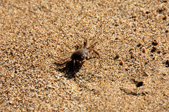 tropiskt undervattens- för krabbalivstidshav fotografering för bildbyråer