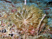 tropiskt undervattens- för växt Royaltyfri Fotografi