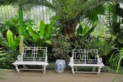 tropiskt växthus arkivbilder