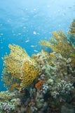 tropiskt vibrerande för färgrik korallrevplats fotografering för bildbyråer