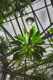 Tropitichesky y plantas exóticas en un jardín botánico, proceso del arte de una foto foto de archivo libre de regalías