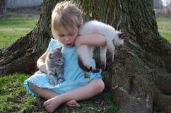 Troppo gattino Fotografie Stock Libere da Diritti