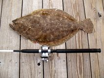 Tropy Doormat Flounder stock photos