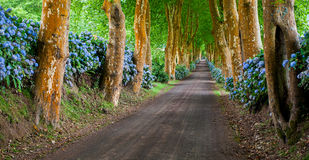 Troqueira road. Tronqueira road in Azores, S. Miguel island Stock Images