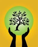 troskliwy ręk istoty ludzkiej drzewo Zdjęcia Stock