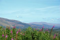 The Trossachs. Wildflowers in the Scottish Highlands (Trossachs National Park stock images