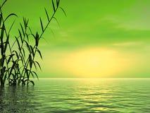 trost захода солнца Стоковые Изображения