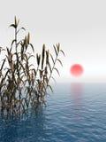 Trost Sunrise. Water plants at sunrise -  3D scene Stock Image