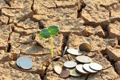 Trostloses Land oder trockene Bereiche haben wenig Grünpflanze und Münzen Stockbild