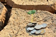 Trostloses Land oder trockene Bereiche haben wenig Grünpflanze und Münzen Lizenzfreie Stockfotos