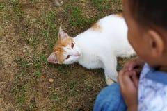 Troszkę śliczna chłopiec bawić się z kotem na zielonej trawie - wizerunek obraz stock