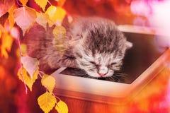 Troszkę śpi na telefonie komórkowym szary kot Przyjemny cukierki barwiący zdjęcia royalty free