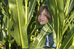 Troszkę chuje w kukurydzanym polu dziewczyna obrazy royalty free