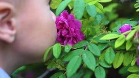 Troszkę delikatnie cieszy się odór kwiaty śliczny dziecko Dziecko podnosi up kwiatu i wdycha swój woń bloom zdjęcie wideo