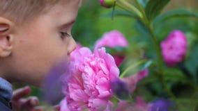Troszkę delikatnie cieszy się odór kwiaty śliczny dziecko Dziecko podnosi up kwiatu i wdycha swój woń target172_0_ zdjęcie wideo