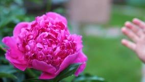 Troszkę delikatnie cieszy się odór kwiaty śliczny dziecko Dziecko podnosi up kwiatu i wdycha swój woń target172_0_ zbiory