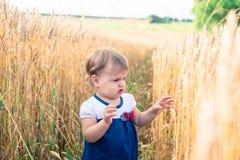 Troszkę dotyka ręka ucho banatka w polu w lecie dziewczyna Obraz Royalty Free