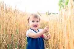 Troszkę dotyka ręka ucho banatka w polu w lecie dziewczyna Zdjęcie Royalty Free