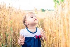Troszkę dotyka ręka ucho banatka w polu w lecie dziewczyna Zdjęcia Royalty Free