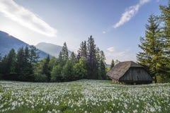 Troszkę drewniana stajnia w polu piękni kwiaty obrazy stock