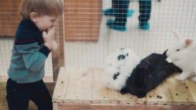 Troszkę dzieci bawią się z królikami zdjęcie wideo