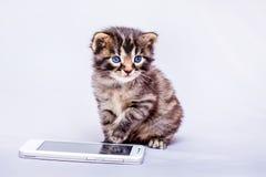 Troszkę siedzi blisko telefonu komórkowego pasiasta kiciunia Wybierać numer wezwanie obrazy stock