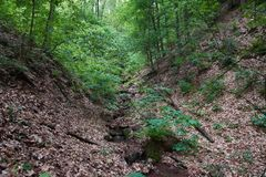 Troszkę strumień w lesie - horyzontalnym obraz stock