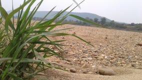 Troszkę trawa w wioski fild blisko rzeki obraz stock