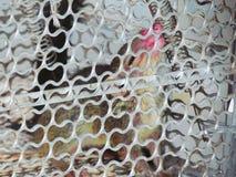 Troszkę wiewiórka łapać w pułapkę w klatce z nosowym urazem, Zdjęcia Stock