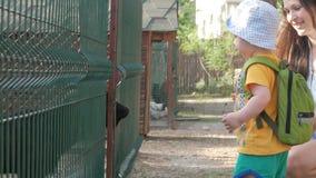 Troszkę wychowywa chłopiec z jego karmi kózki z zieloną trawą w zoo Dzieciak naprawdę lubi ten zwierzęcia zbiory wideo