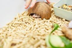 Troszkę chuje w klatce mysz Zdjęcie Stock