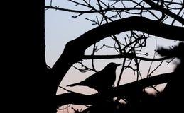 Ptak w drzewie Obraz Royalty Free