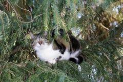 Troszkę siedzi wysoko up w drzewie kot Fotografia Stock