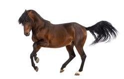 Trot andalou de cheval photographie stock