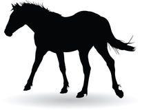 Trot de cheval Images libres de droits