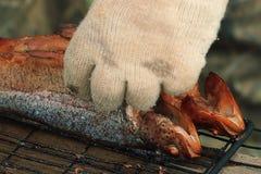 Trota affumicata calda del pesce immagini stock libere da diritti
