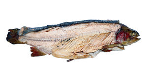 Trota affumicata calda del pesce isolata fotografia stock