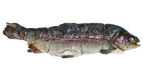 Trota affumicata calda del pesce isolata immagine stock