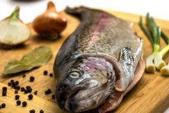 Trota di color salmone fresca Fotografia Stock
