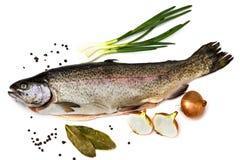 Trota di color salmone fresca Immagine Stock
