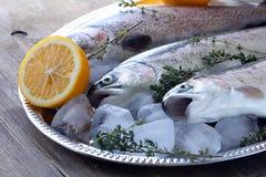 Trota fresca dei pesci crudi su ghiaccio con il limone Immagine Stock