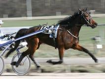 Trotador Imagem de Stock Royalty Free