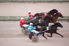Trote del caballo que compite con en el hipódromo de Moscú Imagen de archivo libre de regalías